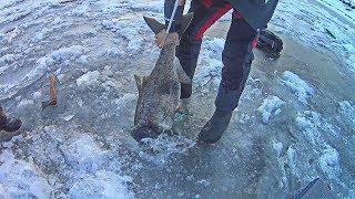 ОГРОМНАЯ РЫБА застряла в лунке Рыбалка со льда на Волге