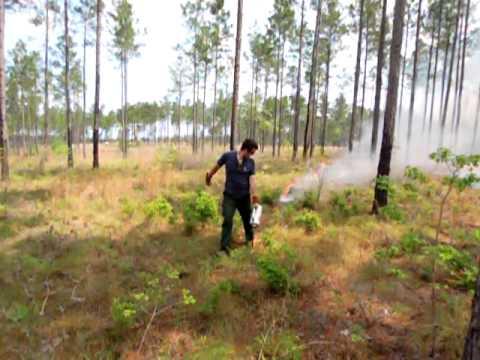 George Bruner Burning at the Plantation