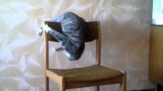 Кот акробат. Бешеный кот Семен Семеныч. А ваш кот умеет такое? Cat Attacks Chair