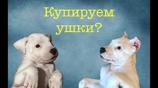 """КУПИРОВАНИЕ! Зачем? Почему? Как? """"Собака для души"""""""