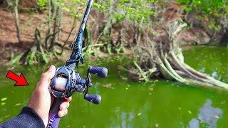 Searching for GIANT Bass in HIDDEN Creeks (River Fishing)