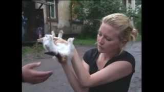 Узбек изнасиловал котёнка при детях.