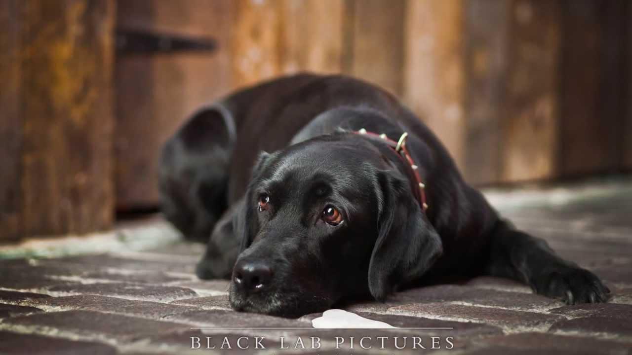 Dog Photographer UK