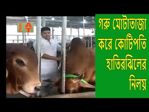 Samarai Beef fattening farm, সামারাই ক্যাটেল ফার্মের দেশি গরুগুলো সব হাতির মত, الماشية مشروع تسمين
