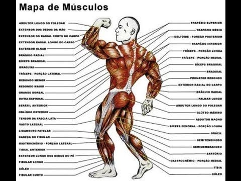 Resultado de imagem para Como aumentar a massa muscular