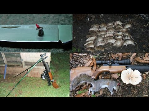 Pest Control with Air Rifles - Squirrel and Rat Shooting - Predator Polymags