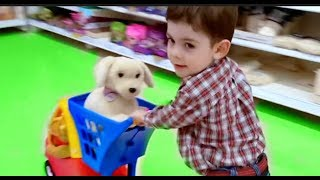 BINGO DOG * Alex doing Shopping with Cozy Coupe Cart * Nursery Rhymes