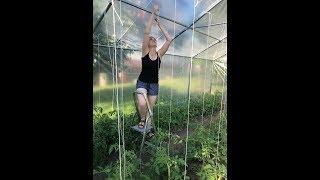 #120- Poradnik pomidorowy- Obrywanie wilków, dolnych liści, wiązanie oraz Wirus Mozaiki Pomidora.