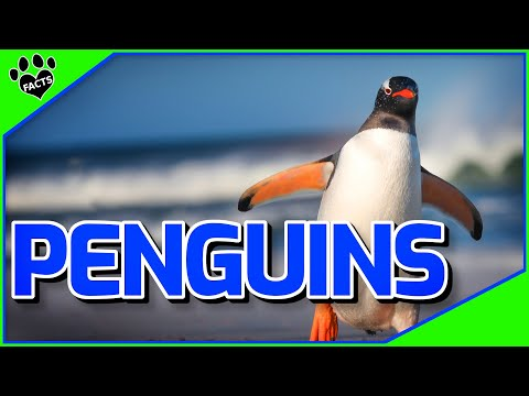 Penguins Facts - The World's 'Coolest' Bird