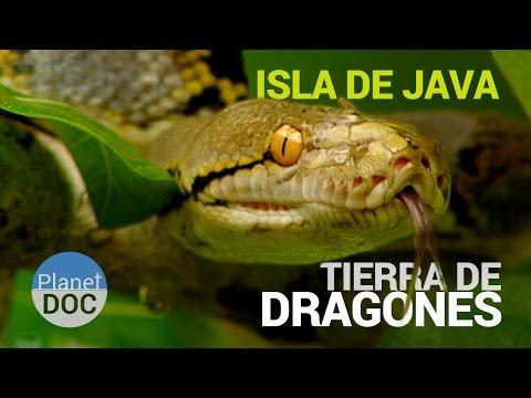 Isla de Java [Indonesia]. Tierra de Dragones   Naturaleza - Planet Doc