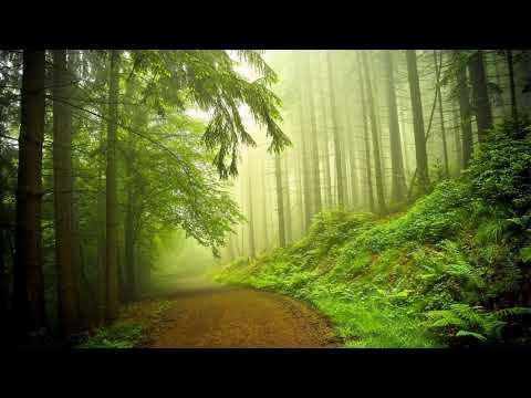 Orman Kuş Sesleri, Huzur Verici Rahatlatıcı Müzik