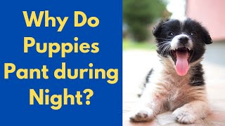 Why is your Puppy Panting during Nighttime? Possible Reasons and Treatment