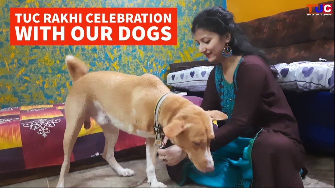 TUC Rakhi Celebration With Our Dogs | happy Raksha Bandhan | TUC