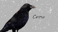 Meaning of Dream about : crow
