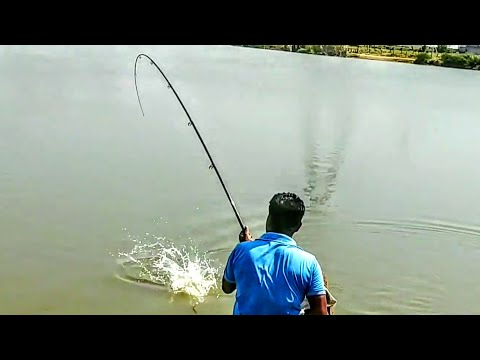 Fish Hunting||Chinese Silver Pomfret Or Red Belly Piranha Fishing
