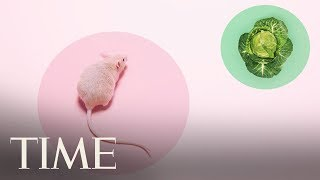 NYC Mice Are Carrying Antibiotic-Resistant Germs | TIME