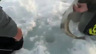 Рыбалка на кольском полуострове видео(Этот ролик обработан в Видеоредакторе YouTube (http://www.youtube.com/editor), 2016-08-09T07:02:48.000Z)