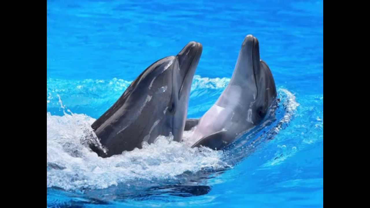 Bottlenose Dolphin Facts for Kids (Bottlenose Dolphin Fun Facts ...