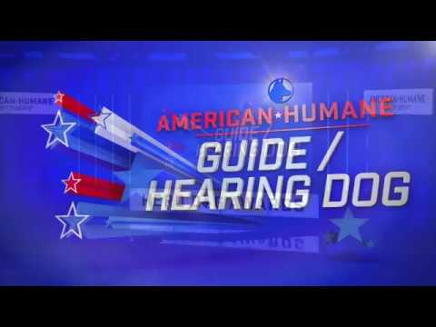 2017 American Humane Hero Dog Awards - Guide/Hearing Dog Category – Pierce