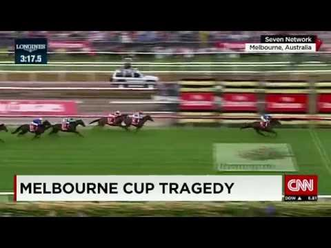 Melbourne Cup tragedy - what led to the death of 2 horses?