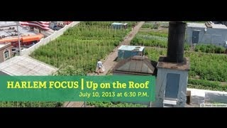 Harlem Focus | Up on the Roof: Farming the Urban Rooftop