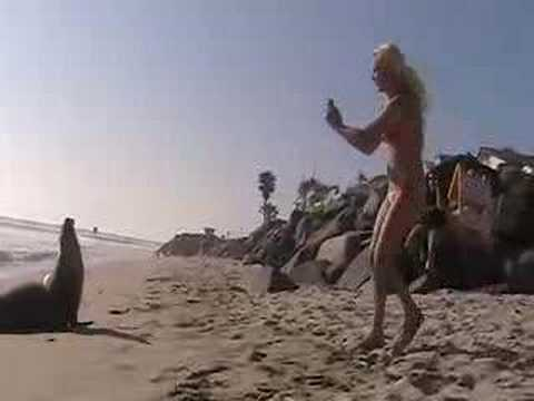 Sea Lion Meets Oceanside