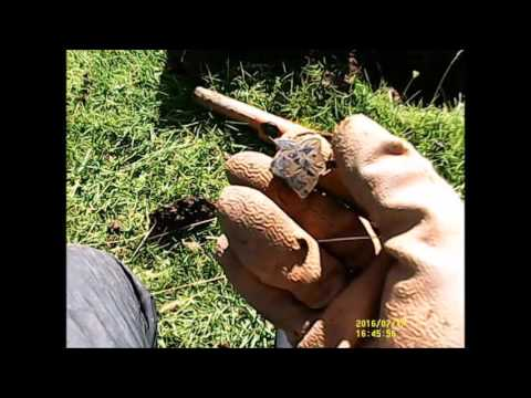 metal detecting best find vintage brass flying birds