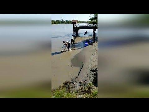 Выпущено 1 300 000 экземпляров личинок сазана в бассейн реки Терек