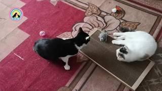 Реакция домашних питомцев на животных из приюта Пристраиваем трех бездомных кошек в семьи