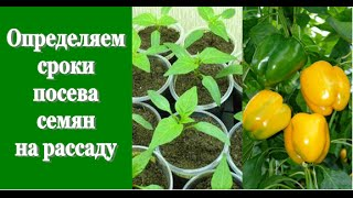 Определяем СРОКИ ПОСЕВА СЕМЯН на рассаду (томаты, перцы, огурцы)(Здравствуйте! В этом видео я отвечу на вопросы, которые мне часто задают относительно сроков посева семян..., 2015-02-21T07:29:57.000Z)
