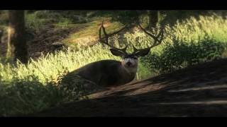 """theHunter Game 2009 - """"Bow Hunt - Muledeer"""" by TNT"""