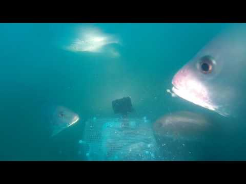 Captain Murphy's/Murphy's Law Underwater Views 07/08/17