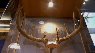 Record Antlers Unveiled