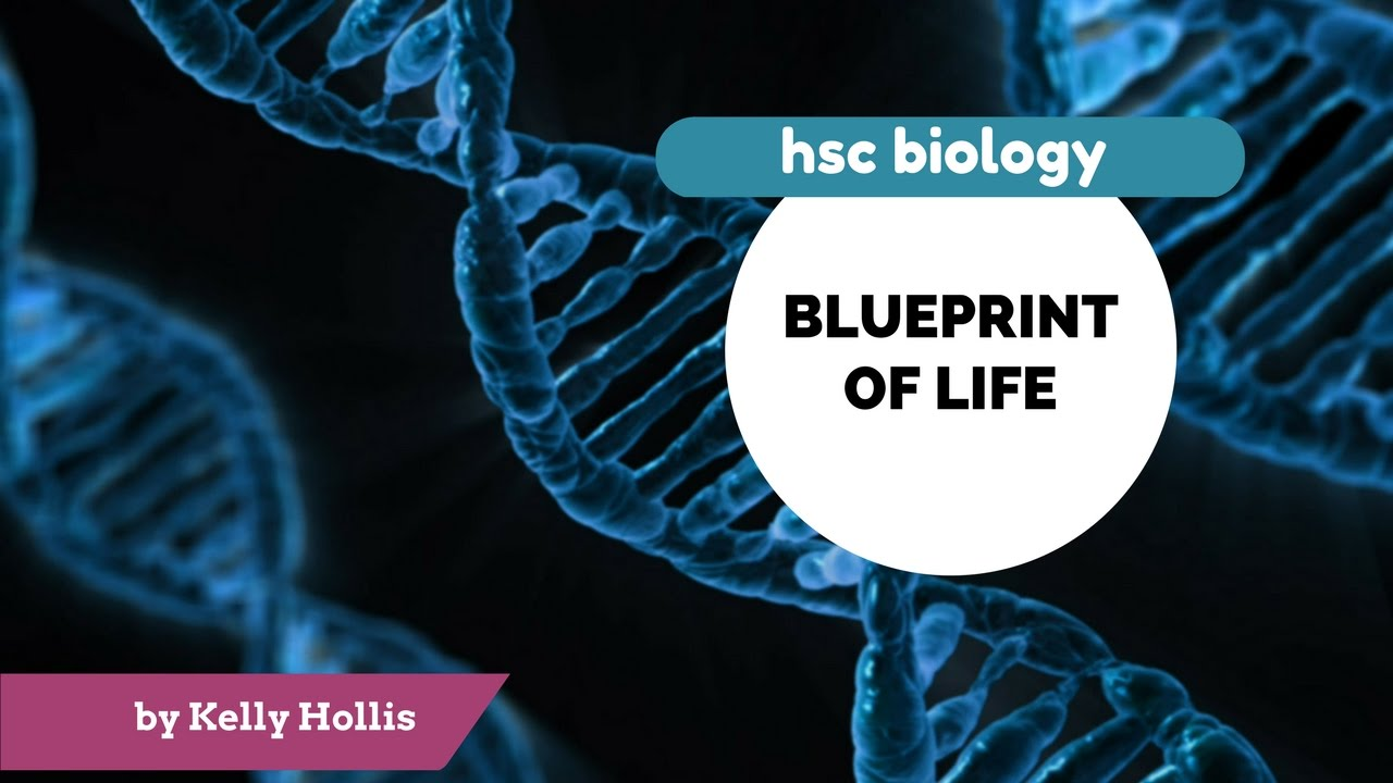 Blueprint of life 934ii a protein synthesis youtube blueprint of life 934ii a protein synthesis malvernweather Choice Image