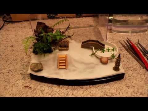 Baby FireBelly Newt Setup(Tutorial) basic/intermediate