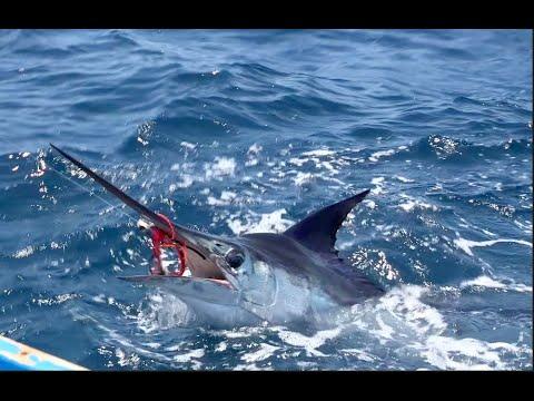 Jansen , Marlin Action!