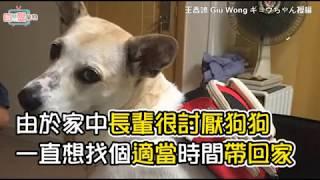 阿嬤妳好好吃飯不行嗎?不要一直玩狗啦! 當初說討厭狗的是妳們耶!!說不養的也是妳們耶!!現在讓個位置讓我吃飯好嗎QAQ