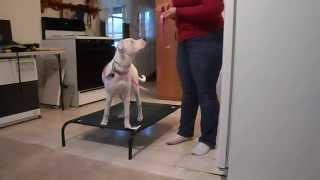 Training Deaf Dog - Place Command