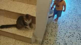 Ali's cat بسة علي