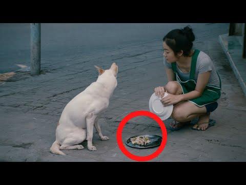 وضعت هذه الفتاة بعض الطعام لهذا الكلب .. و لكن ما فعله الكلب كان صادم جدا !! شاهد المفاجئة