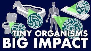 Tiny Organisms, Big Impact