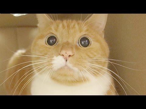 iris of funny cats getting very big / 猫ズの黒目が真ん丸すぎる【猫 おもしろ】
