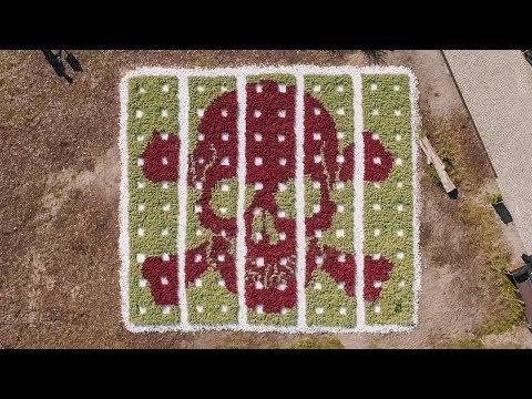 Tim Bengel Creates Large-Scale 'Flower Skull Cemetery' Overnight
