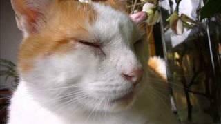 Download Video Lilis suryani - tanjong katong MP3 3GP MP4