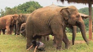 Assignment Asia Episode 78: Saving Animals