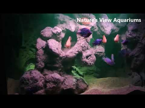 Nature's View original self designed aquarium