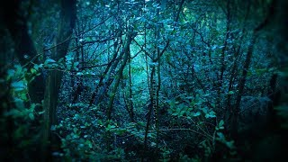 Download Rain in Forest White Noise | Sleep, Study, Soothe a Baby | 10 Hours Rainstorm Mp3 and Videos