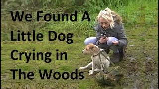 We Found A little Dog Crying in the Woods - Lost Dog - Cute Dog - Vanlife