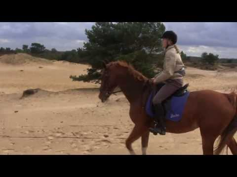 Fast gallop on sand plain