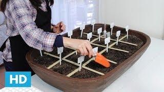 Como plantar Sementes na sua Horta